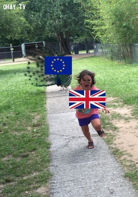 Sự kiện Anh rời bỏ liên minh EU cũng đã được tận dụng,troll photoshop,con công,sở thú,cộng đồng mạng