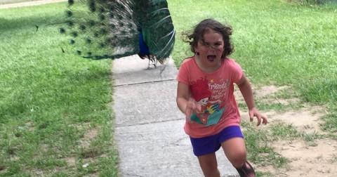 Cô bé chạy trốn con công trở thành nhân vật hoàn hảo cho các bức ảnh hành động