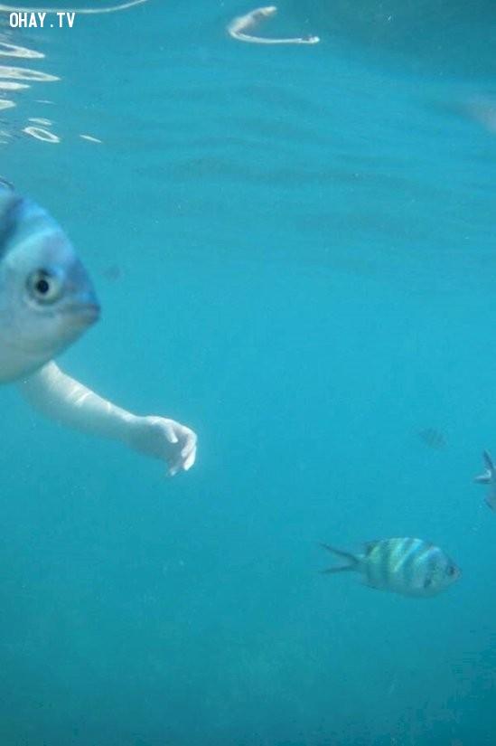Kìa! Cá có tay, một loài mới chăng?,ảnh hại não,hài hước,ảnh lạ