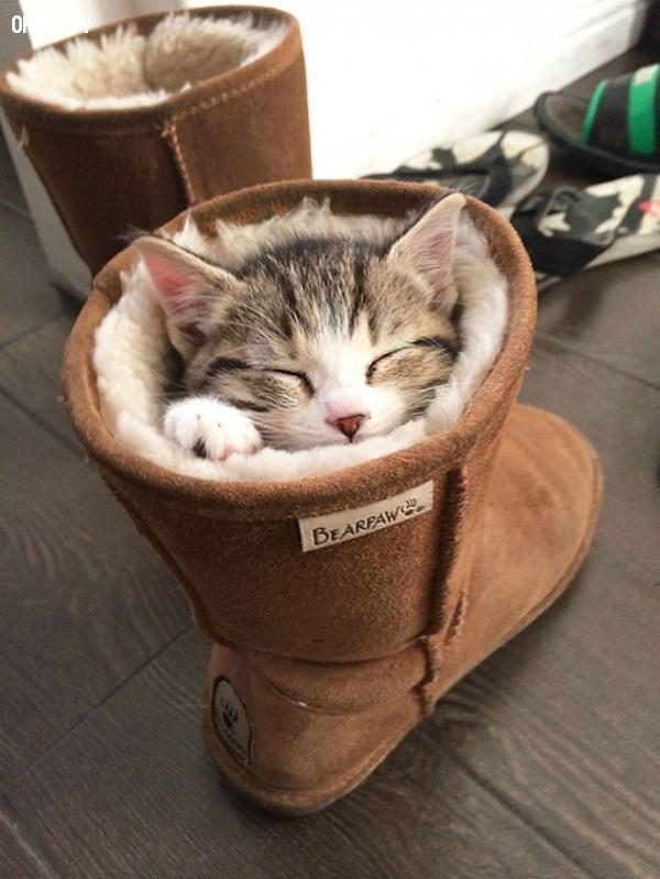 Chẳng thiết đi đâu cả!,18 hình ảnh hài hước về logic của loài mèo