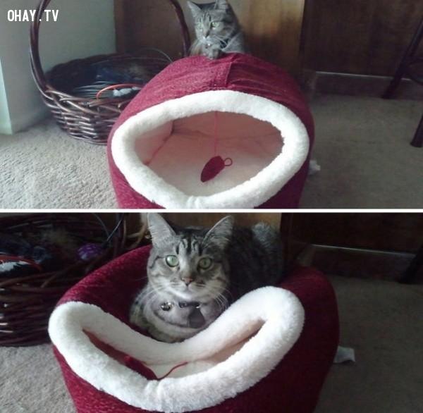 Ngủ bên trong này ư? Không, không đời nào.,18 hình ảnh hài hước về logic của loài mèo