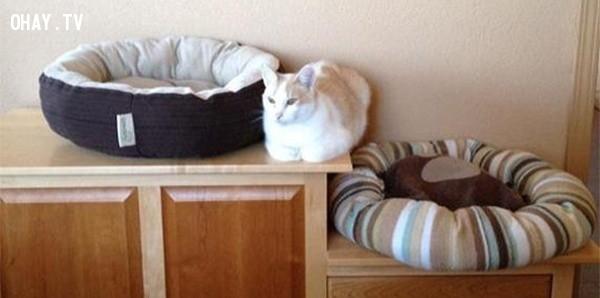 Hoàn hảo!,18 hình ảnh hài hước về logic của loài mèo