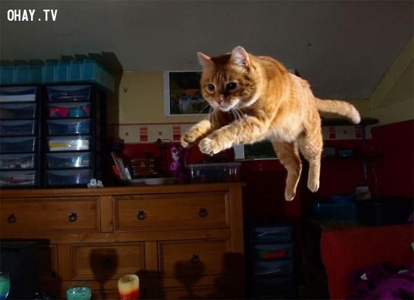 Bay nhảy không cần lý do. ,18 hình ảnh hài hước về logic của loài mèo