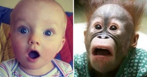 15 biểu cảm siêu đáng yêu của các loài động vật