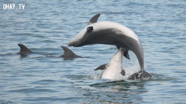 ,động vật,đáng yêu,sự thật,cá heo độc ác,cá heo giao phối,động vật dễ thương,những điều thú vị về cá heo