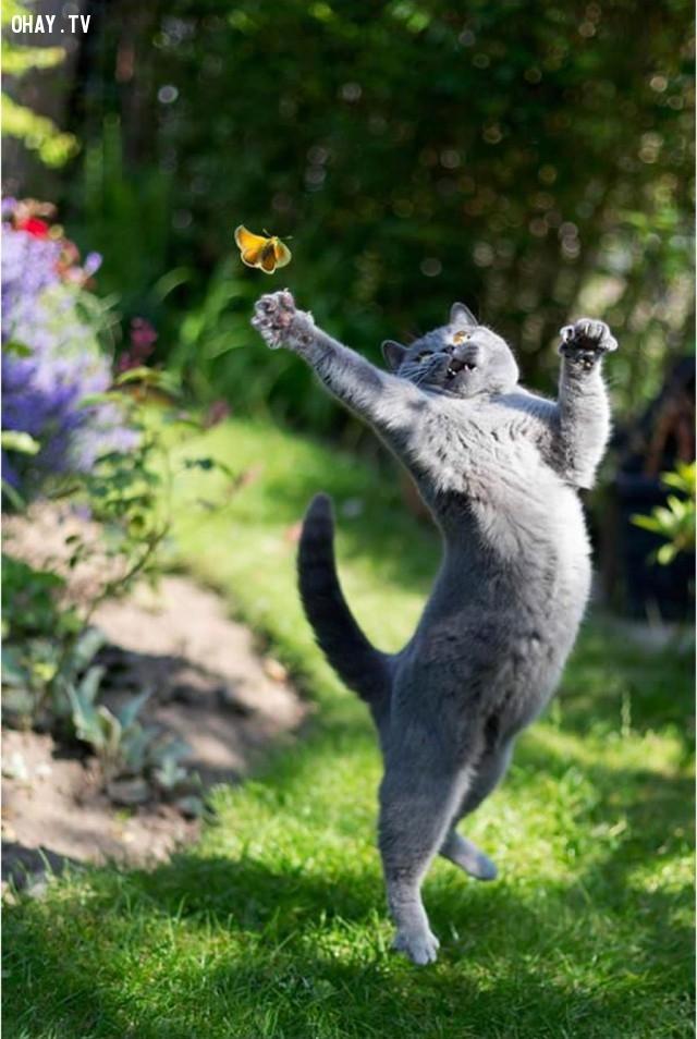 Ôi! Tôi muốn nó,động vật đáng yêu,những con vật dễ thương,những con vật hài hước