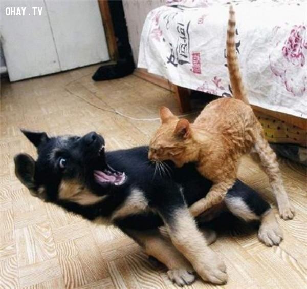 Chúng tôi đùa thôi mà.,động vật đáng yêu,những con vật dễ thương,những con vật hài hước