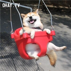 Xích đu là thú vui tao nhã.,động vật đáng yêu,những con vật dễ thương,những con vật hài hước