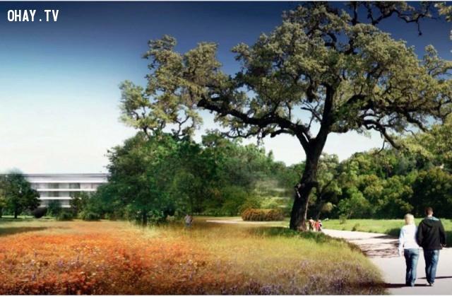 Một khi được hoàn thành, 80% của trụ sở này sẽ được phủ cây xanh. Sẽ có đến 7000 cây xanh trong khuôn viên trụ sở.,khám phá,trụ sở Apple Campus 2,trụ sở hình đĩa bay của Apple
