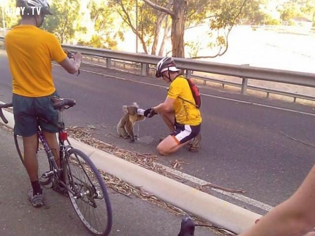 Những người đàn ông dừng lại giúp một chú koala đang mất nước,cảm hứng,bức ảnh