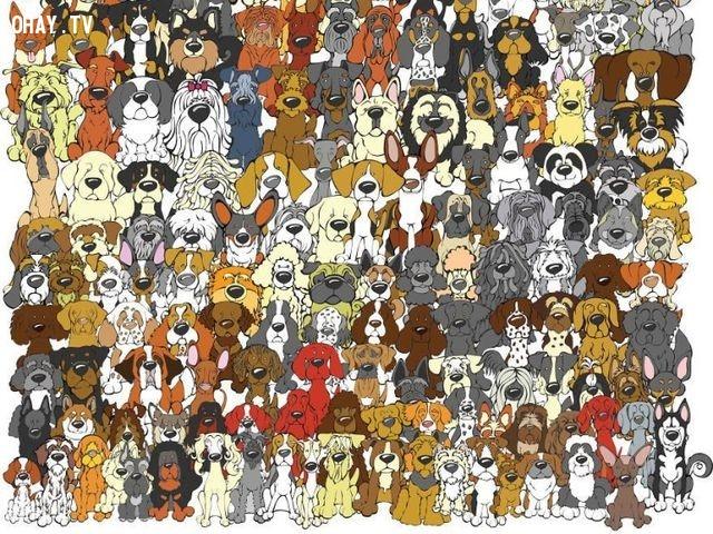 2. Hãy tìm chú gấu Panda giữa những chú chó trong hình.,trắc nghiệm kiểm tra thị giác,trắc nghiệm kiểm tra thị lực,thị giác,thị lực,trắc nghiệm vui,thử tài tinh mắt