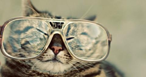 20 khám phá về Mèo, không phải ai cũng biết