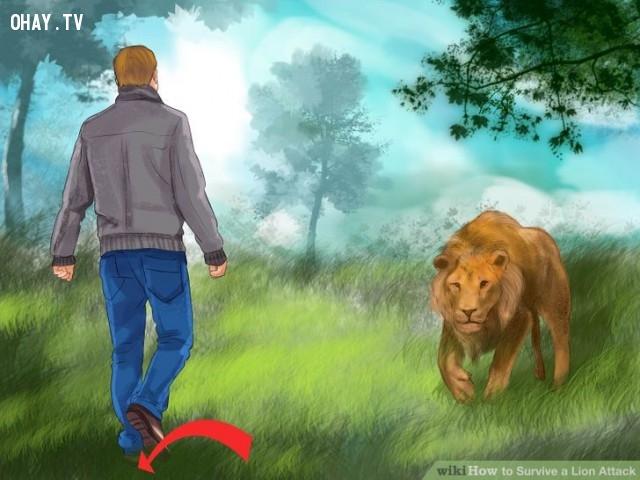 Luôn trong tư thế chuẩn bị.,kỹ năng sinh tồn,đối phó với hổ,đối phó với sư tử