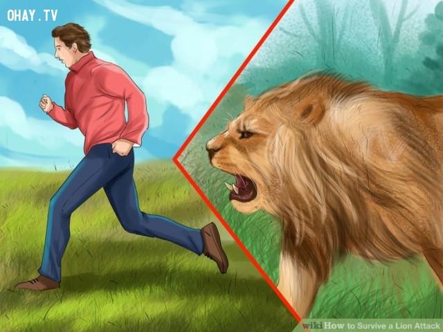 Từ từ lùi bước. Không quay đầu chạy.,kỹ năng sinh tồn,đối phó với hổ,đối phó với sư tử