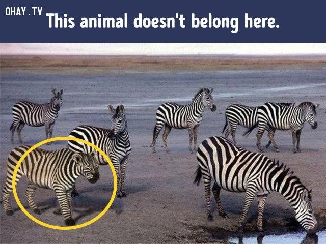 1. Có một con vật không cùng loài.,khác lạ,câu đố