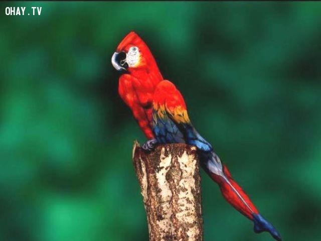 2. Đó là một con vẹt đứng trên một khúc gỗ. Hay là gì?,khác lạ,câu đố