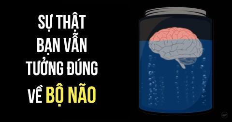 7 sự thật bạn vẫn tưởng là đúng về bộ não