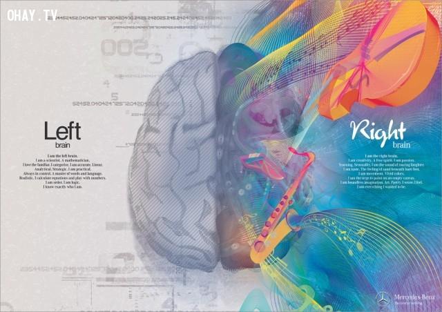 ,sự thật thú vị,bộ não