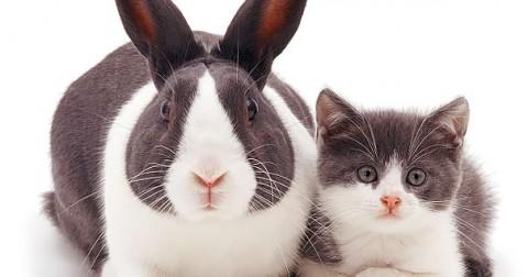 Hài hước những động vật giống nhau như anh em