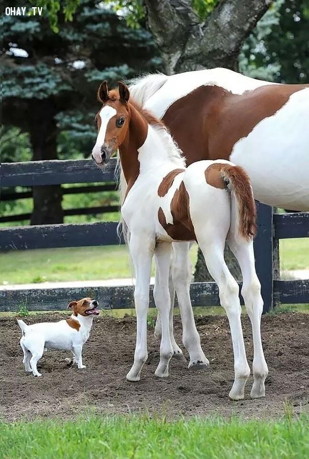 7. Vấn đề chỉ là kích thước,hài hước,động vật,những điều thú vị trong cuộc sống,con vật giống nhau