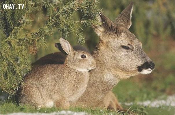 4. Nhìn xa cứ tưởng mẹ con nhà thỏ.,hài hước,động vật,những điều thú vị trong cuộc sống,con vật giống nhau