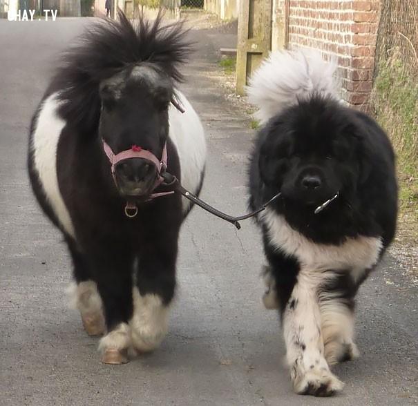 5. Ai là ngựa ai là chó đây?,hài hước,động vật,những điều thú vị trong cuộc sống,con vật giống nhau