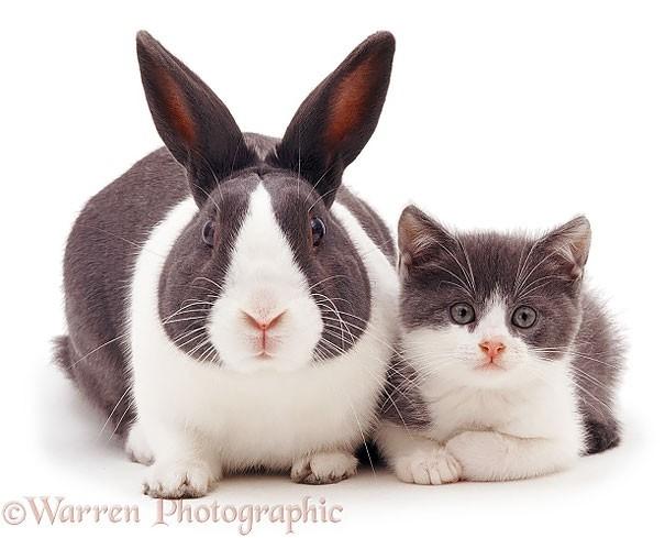 3. Bỏ đôi tai dài là thỏ hóa mèo.,hài hước,động vật,những điều thú vị trong cuộc sống,con vật giống nhau
