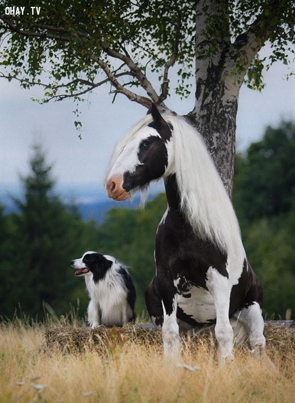 9. Style của năm nên ai cũng nhuộm lông thế đấy.,hài hước,động vật,những điều thú vị trong cuộc sống,con vật giống nhau