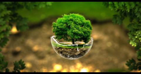 Cách người Ấn Độ trồng 50 triệu cây chỉ trong 24h