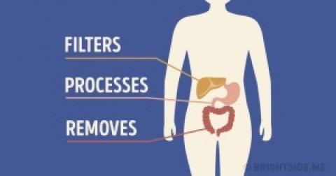 Infographic: Điều gì sẽ xảy ra với cơ thể khi bạn vô tình nuốt phải kẹo cao su?