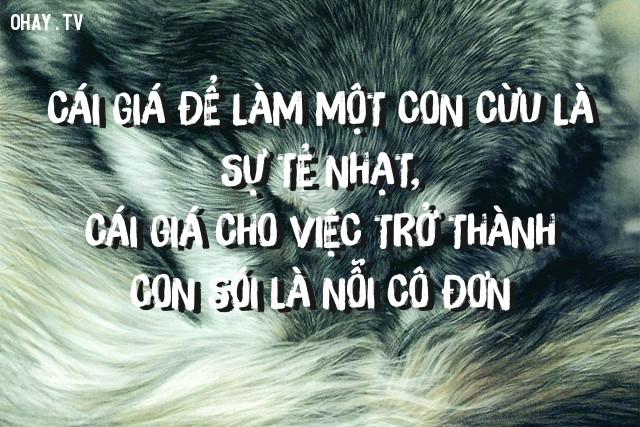 Cái giá để làm một con cừu là sự tẻ nhạt, cái giá cho việc trở thành con sói là nỗi cô đơn,suy ngẫm,câu nói hay,triết lý cuộc sống