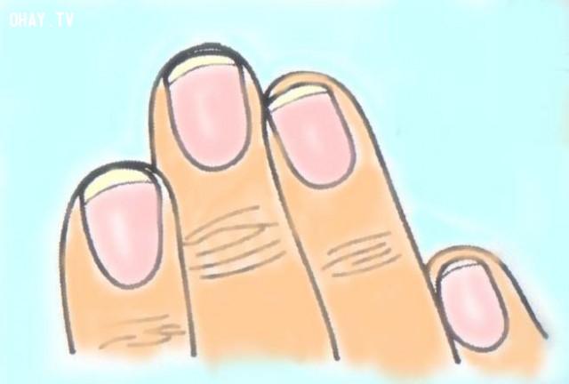 2. Móng tay dài hơn 1/2 đốt tay có móng,hình dáng móng tay,tính cách,năng lực,móng tay,nhân tướng học