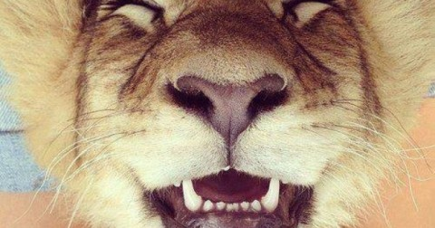 Khi động vật cười
