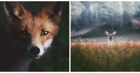 Ngỡ ngàng trước vẻ đẹp lung linh của các loài động vật hoang dã