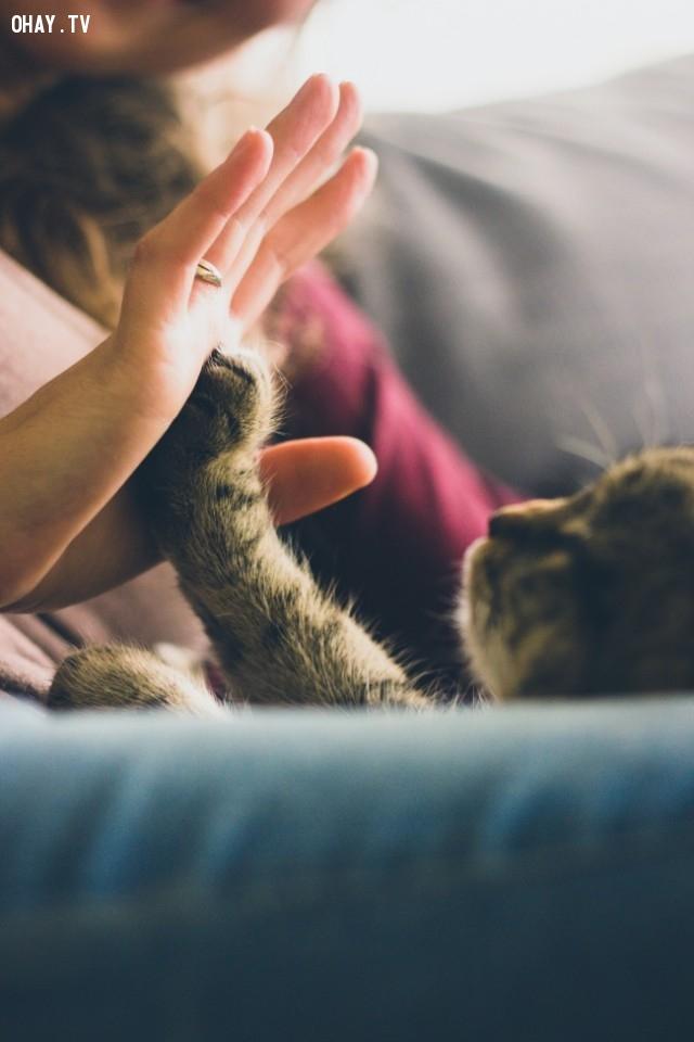 Vuốt ve một bé mèo,khoảnh khắc quý giá của cuộc sống,suy ngẫm,hãy đặt điện thoại xuống,cảm nhận thế giới xung quanh,mặt trái của điện thoại