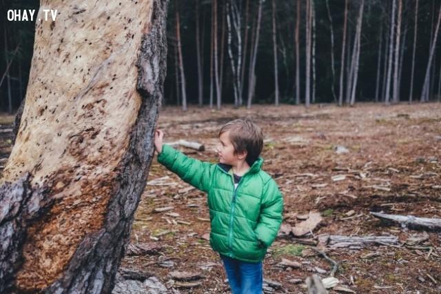 Hãy thử nhớ lại cảm giác khi còn là một đứa trẻ và lần đầu tiên bạn được chạm vào một cái cây to,khoảnh khắc quý giá của cuộc sống,suy ngẫm,hãy đặt điện thoại xuống,cảm nhận thế giới xung quanh,mặt trái của điện thoại