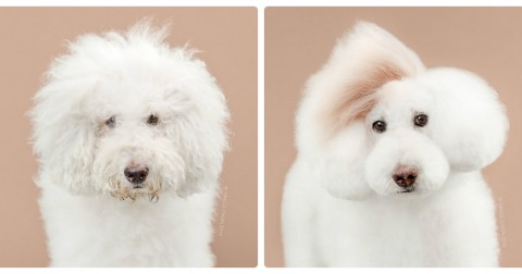 Before & after - Khi thú cưng được làm 'đỏm'
