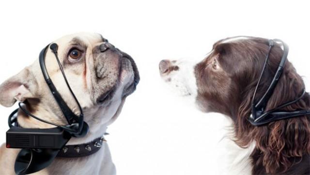 No More Woof - thiết bị dịch ngôn ngữ của những chú chó,sáng tạo,những điều thú vị trong cuộc sống,sản phẩm độc đáo,phát minh tương lai