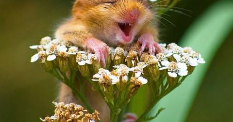Tan chảy với bộ ảnh về nụ cười hạnh phúc của các loài động vật