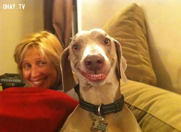 ,động vật,niềm vui,mỉm cười,dễ thương,nụ cười