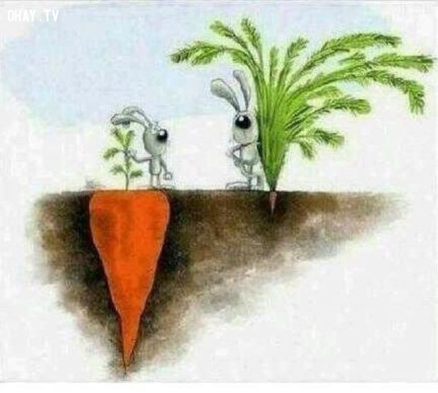 Ảnh 2: Thành công không phải là thứ bạn có thể nhìn thấy ngay,suy ngẫm,ý nghĩa cuộc sống,ảnh đẹp