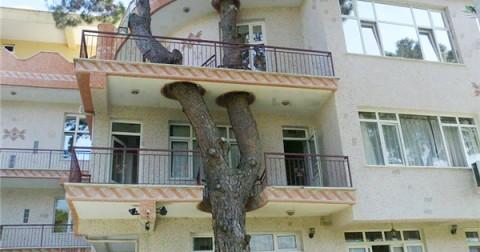 Những ngôi nhà ôm cây đẹp đến ngỡ ngàng