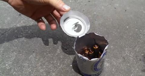 Hãy để một lon bia uống dở vào chỗ hay có gián, điều bất ngờ sẽ xảy ra