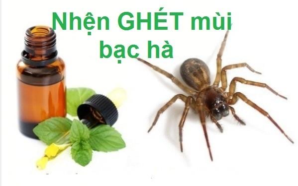 """Bí mật của chúng, """"bọn"""" côn trùng,côn trùng,cây bạc hà,diệt côn trùng"""