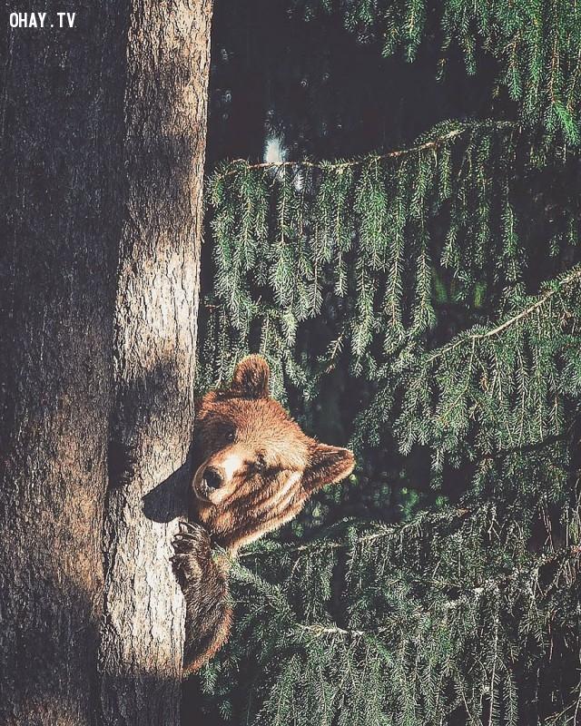 ,rừng sâu,thế giới động vật