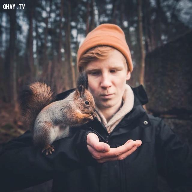 Hình ảnh thân thiết của Konsta Punkka với một chú sóc nhỏ,rừng sâu,thế giới động vật