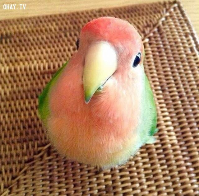 Bạn có muốn chú chim này là thú cưng của mình không?,ảnh đẹp,ảnh không photoshop