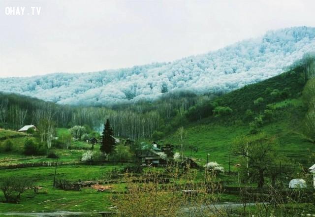 Khi tuyết rơi ở Altai, khu tự trị Tân Cương, phía tây Trung Quốc.,ảnh đẹp,ảnh không photoshop