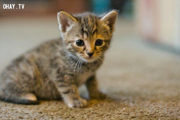 Nhìn vào bức ảnh của mèo con,cải thiện trí nhớ,não bộ