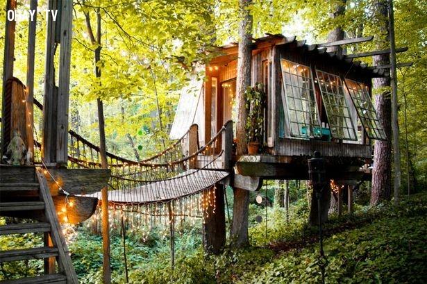 Nhà cây,thiết kế độc đáo,nhà trong rừng